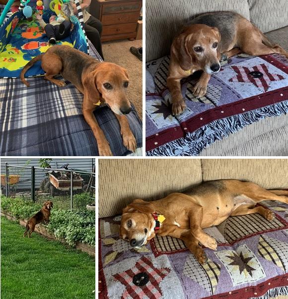 Dachshund Doxen Weiner Word Art Dog Owner Gift 2-6 Years Old Boys /& Girls Short Sleeve Tee Shirts